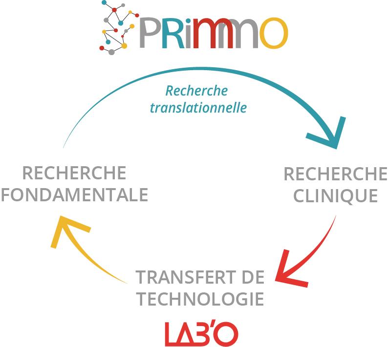 Schéma PRIMMO cheminement de recherche